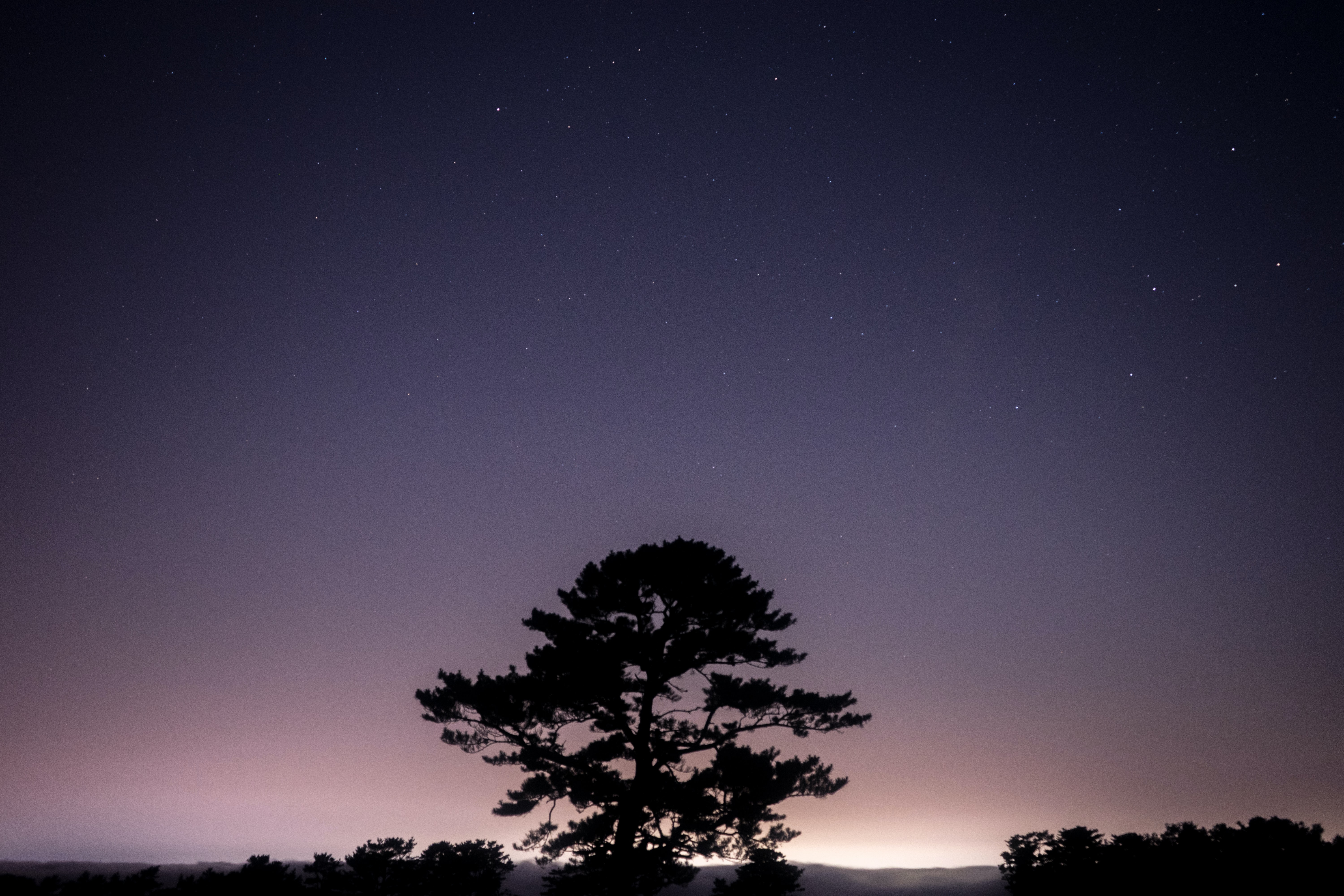 A silhouette of a large tree against purple starry sky