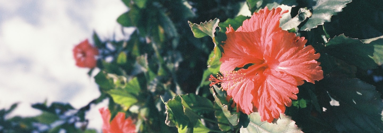 Top 10 FullSun Perennials for Michigan Gardens