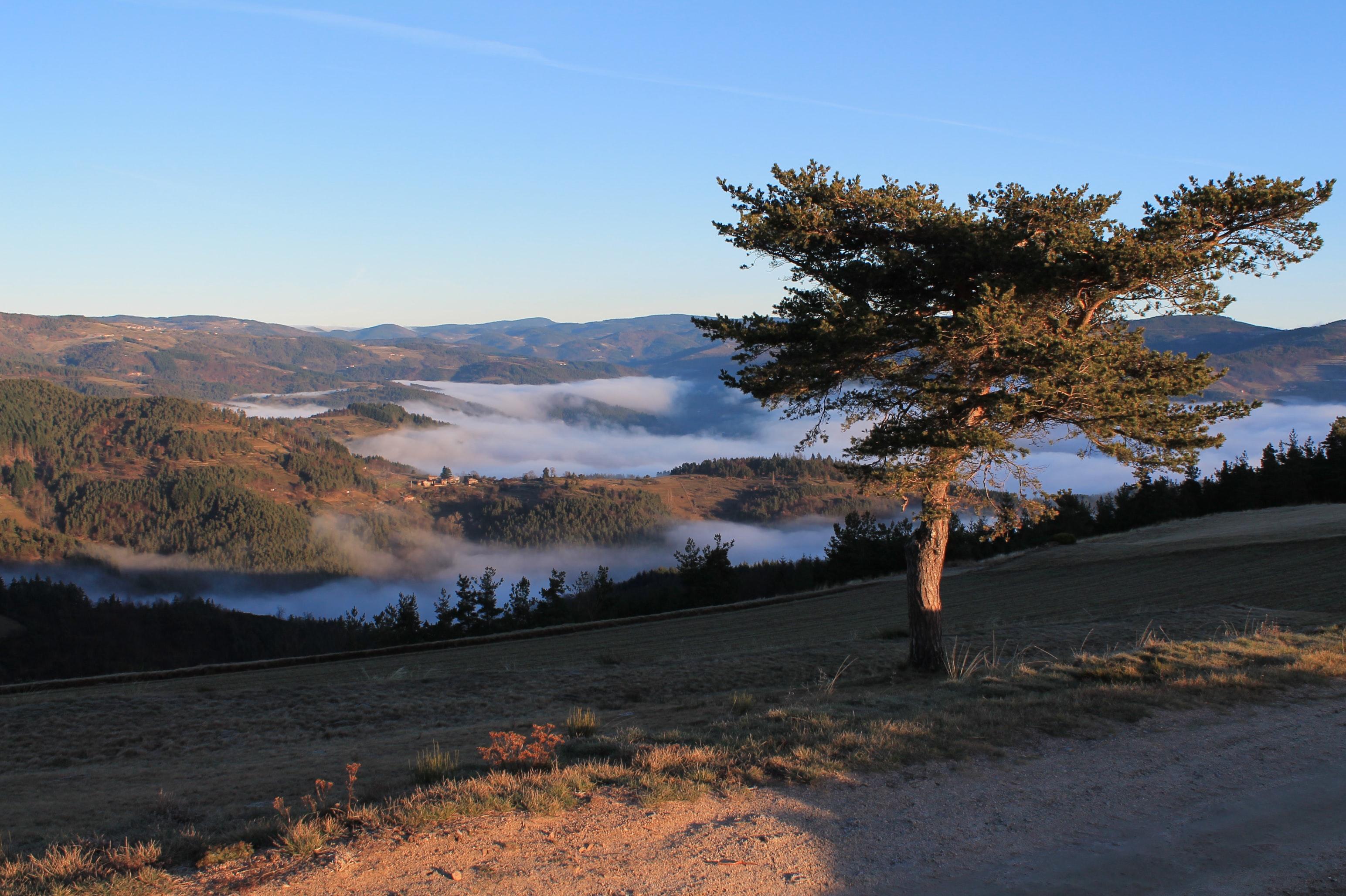 A lone tree on a slope with a fog-shrouded valley in the back