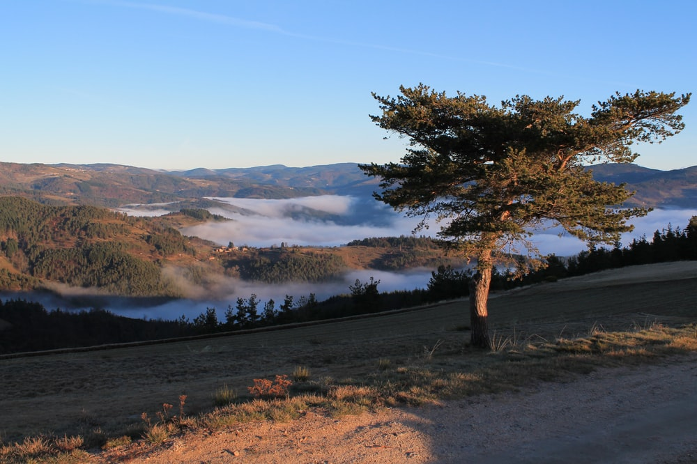 hills surrounded by fogs