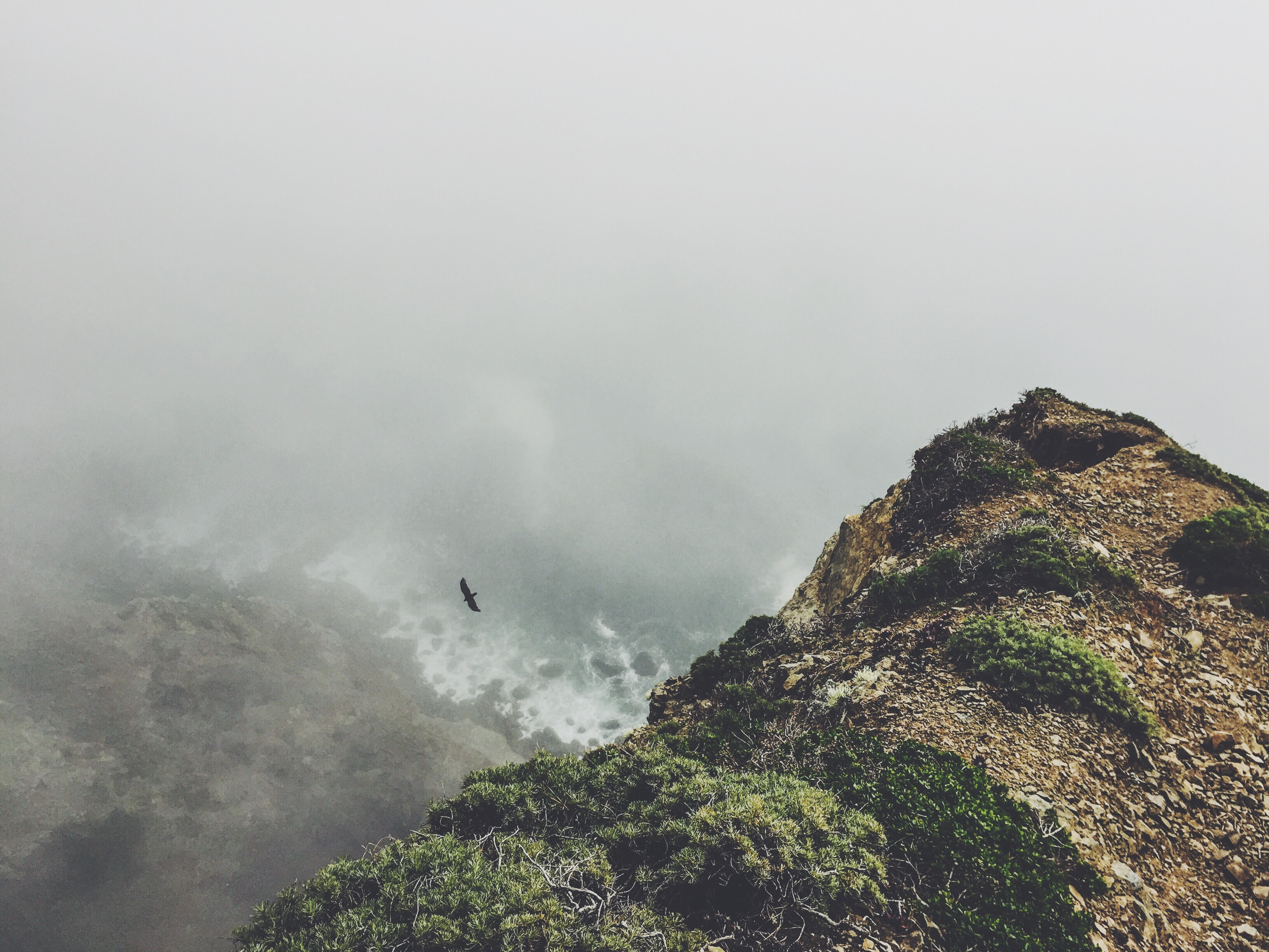 Bird soars over coastal bluffs on a foggy day