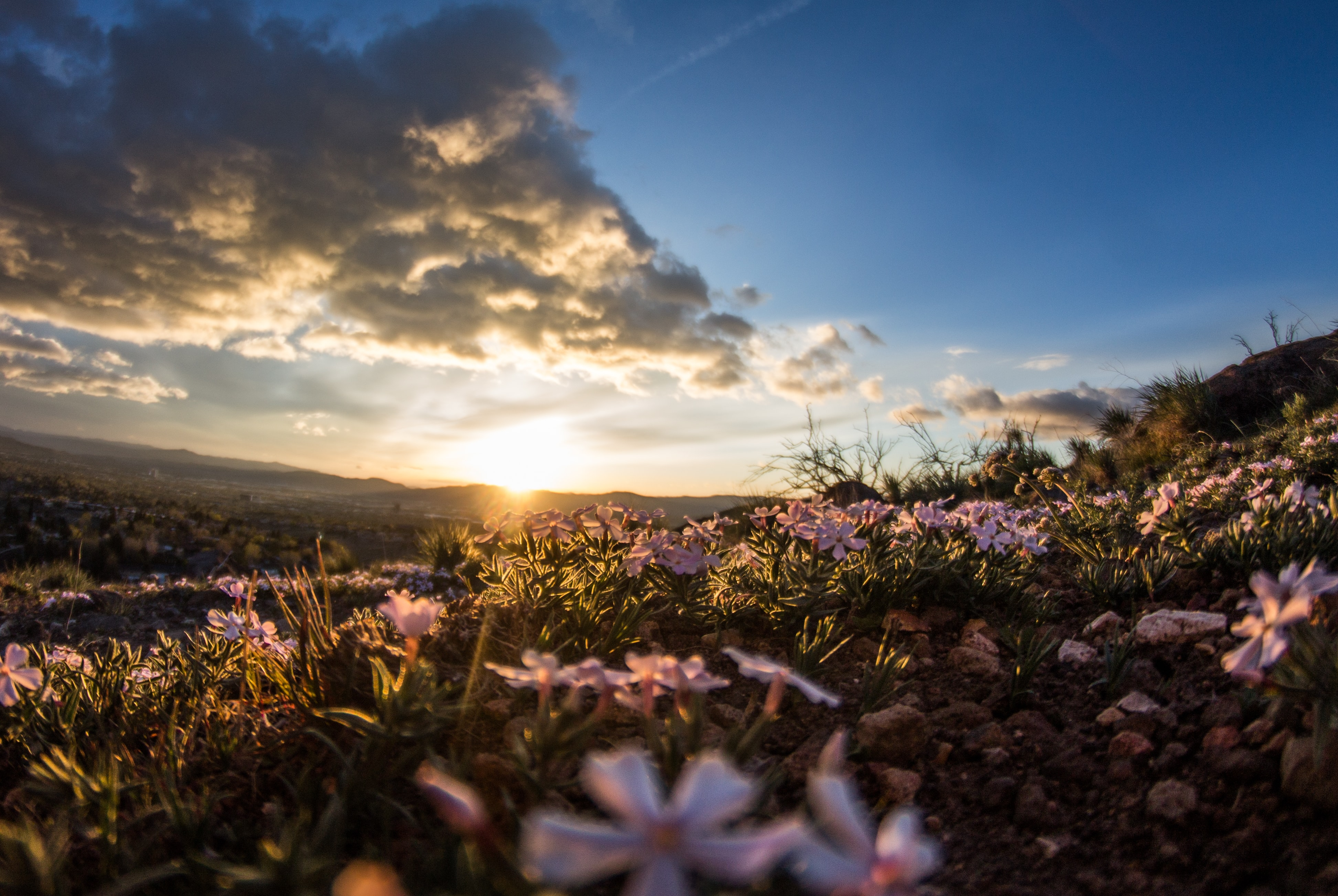 A rocky meadow with white flowers during sunrise