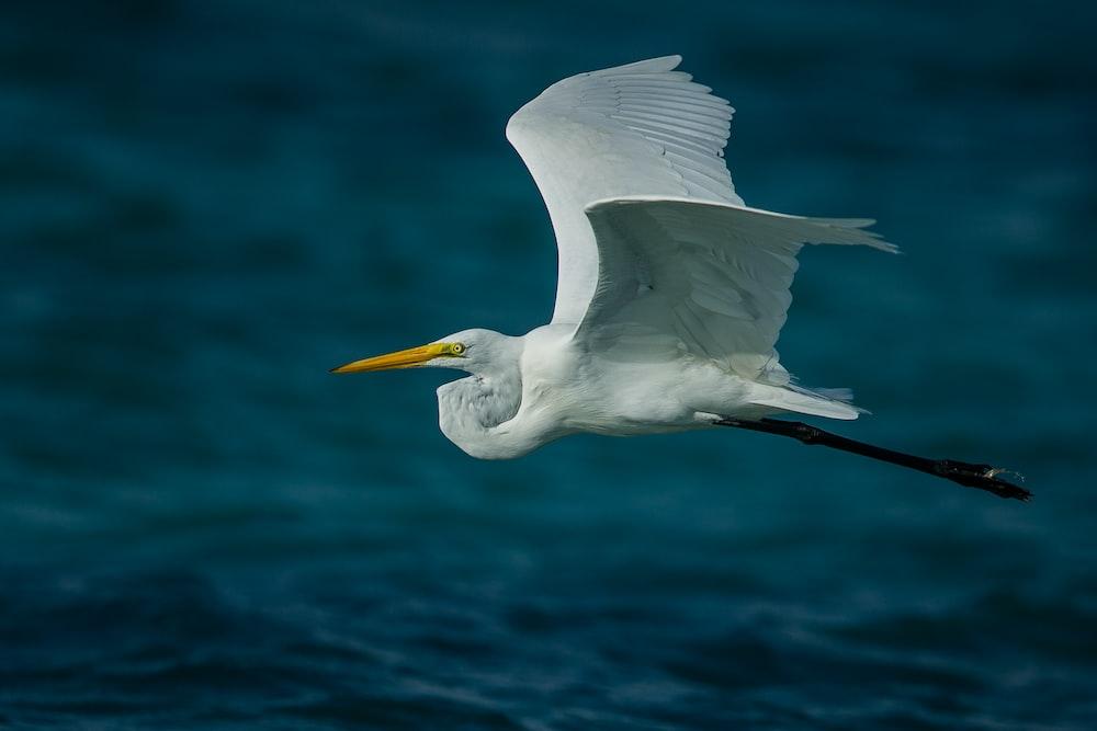 flying white bird near body of water