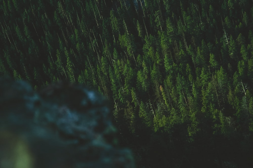 high angle photography of green trees at night