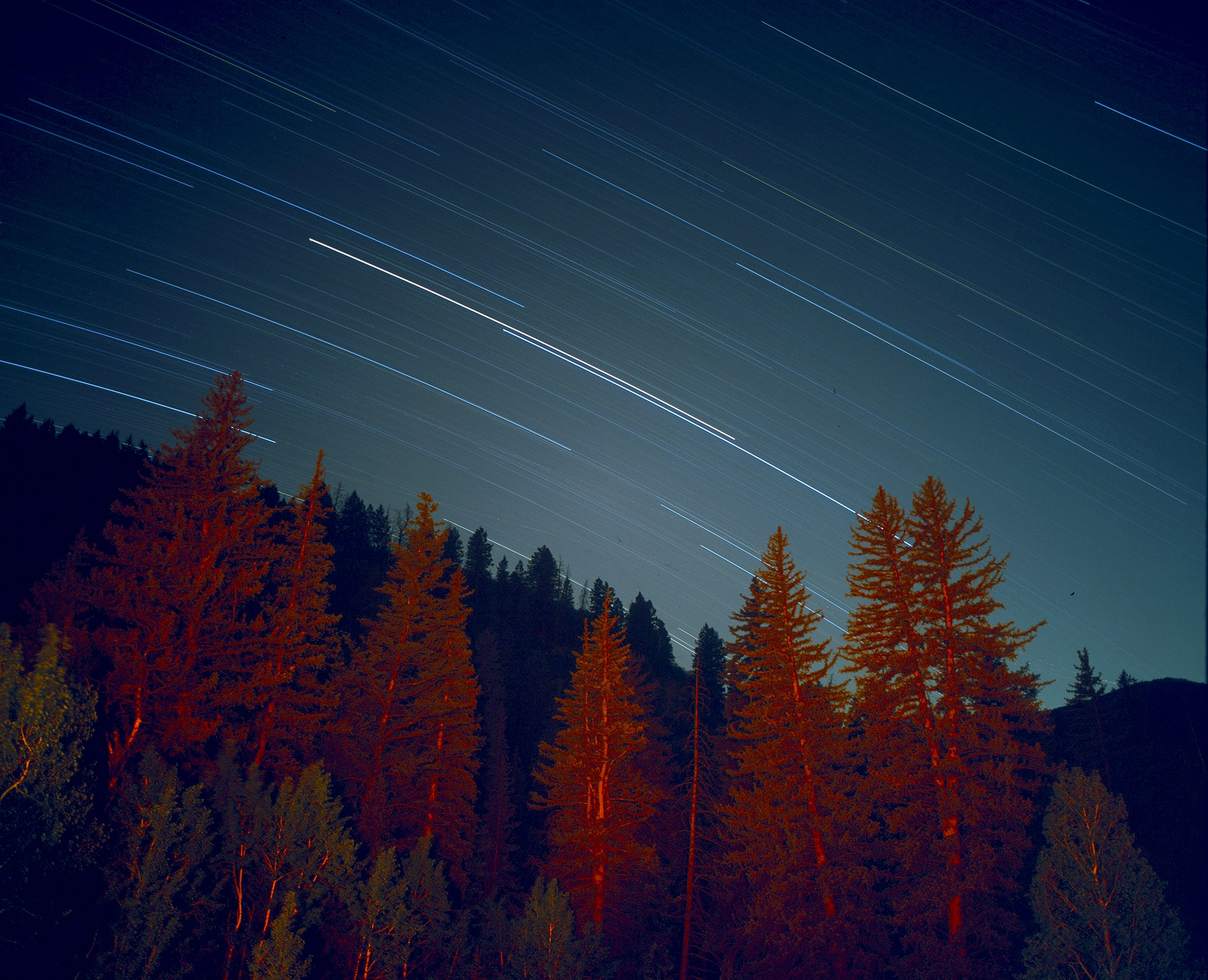 Red light on coniferous trees under straight lines formed by stars moving in the sky