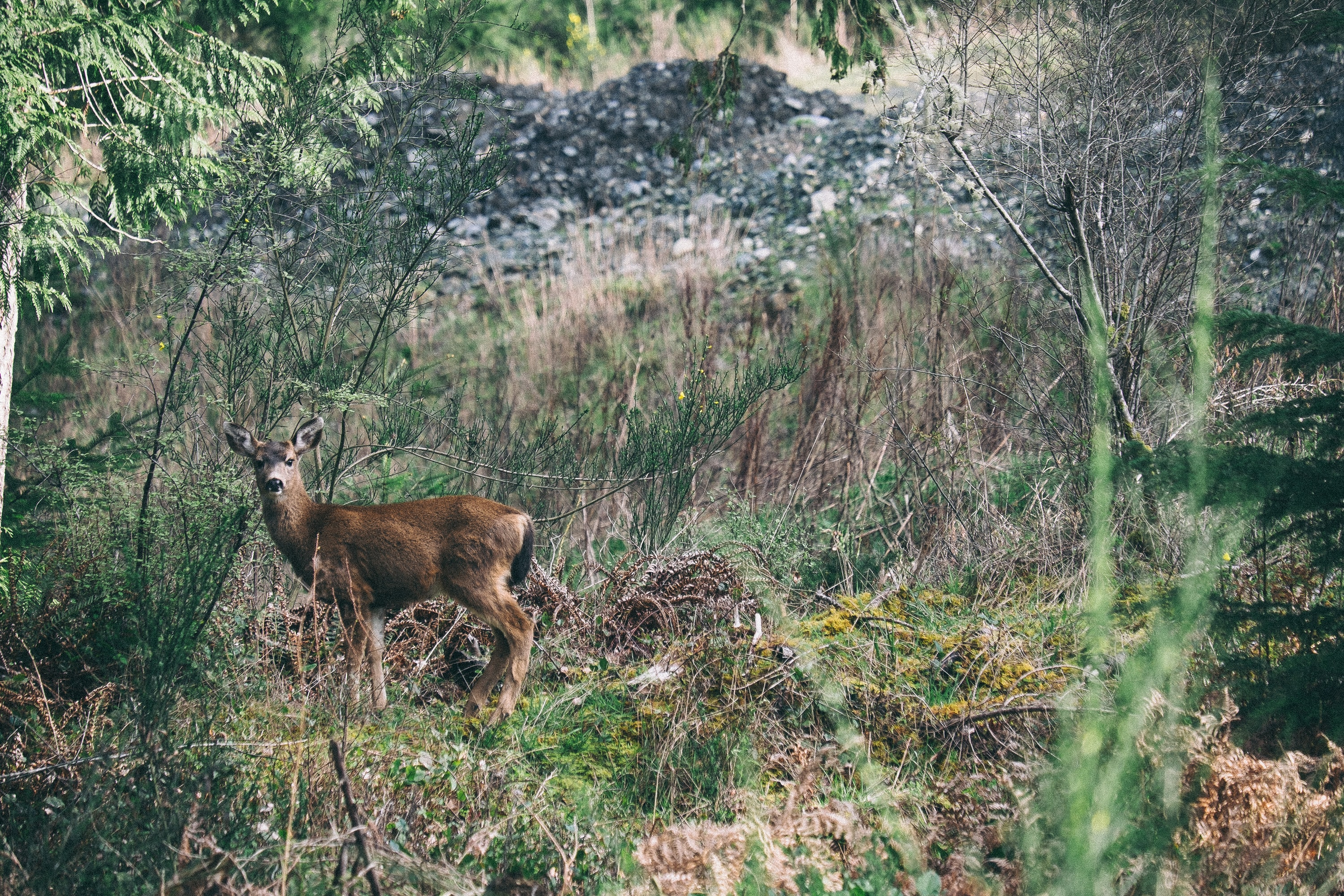 brown standing deer surrounded by green plants and trees