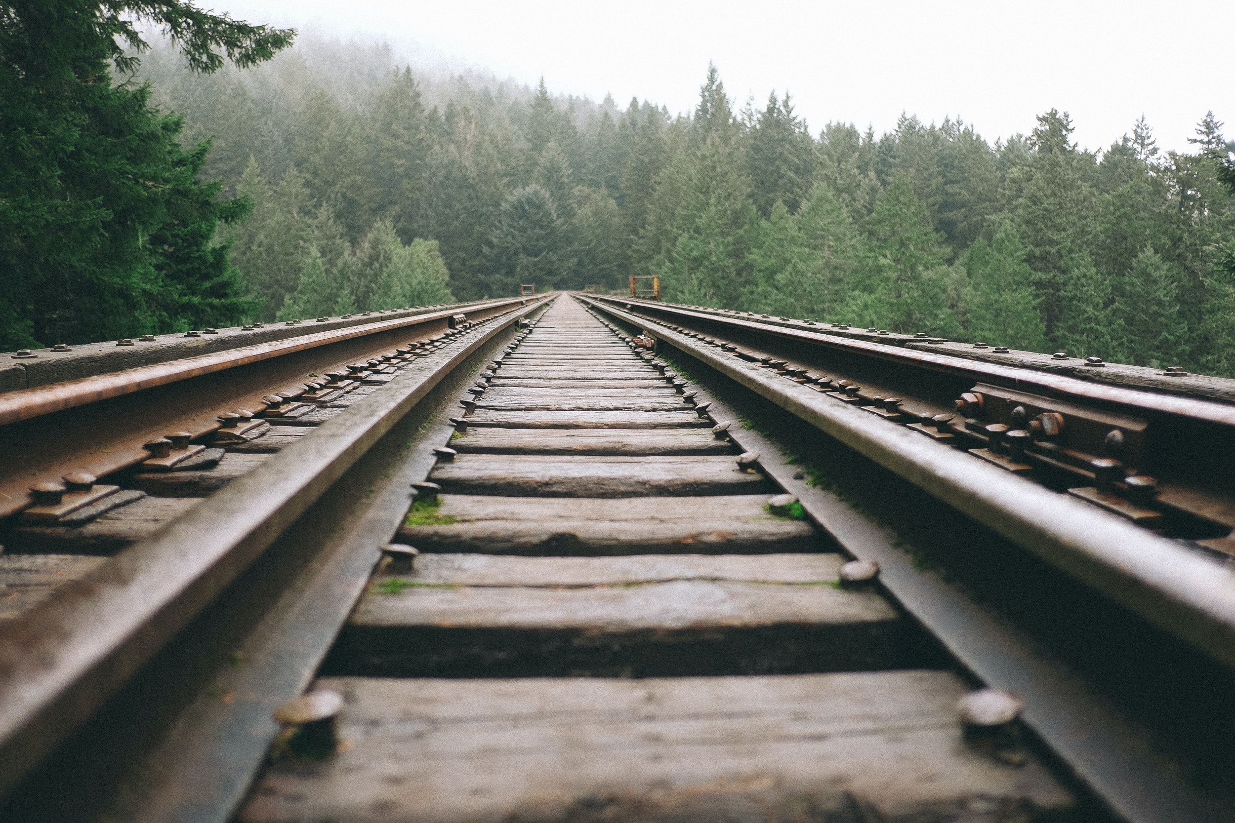 A low-angle shot of a railroad track running straight through a forest