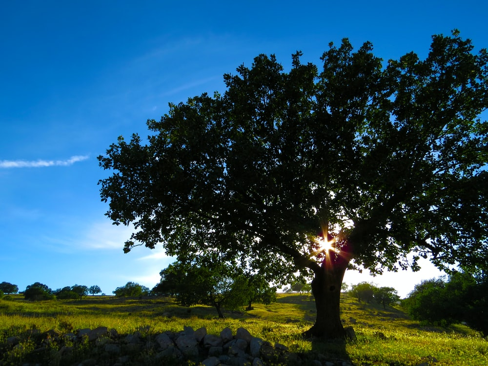 landscape photography of grass lawn with tree