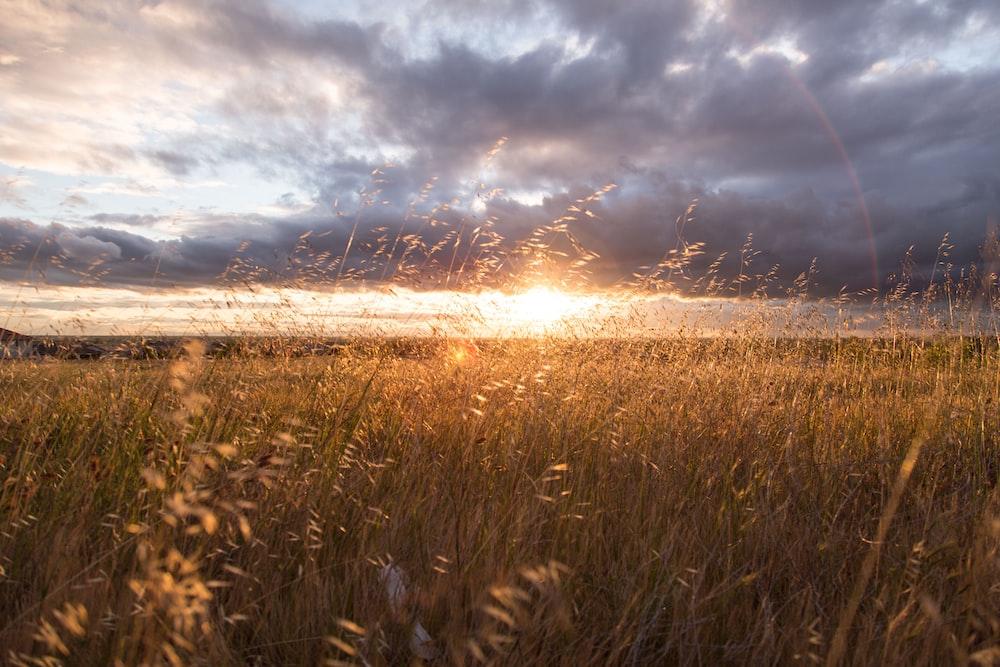 closeup photo of green grass field