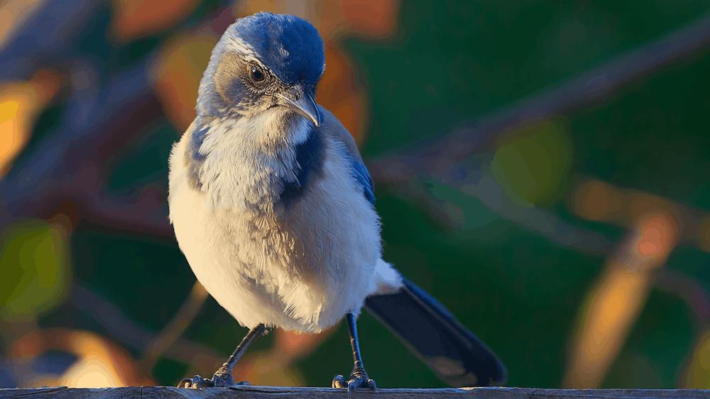 close up photo of gray and white bird