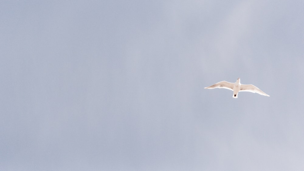 white bird flying in the middle of sky taken at daytime