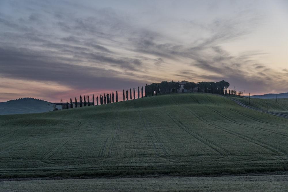 green grass field during golden hour landscape photograph