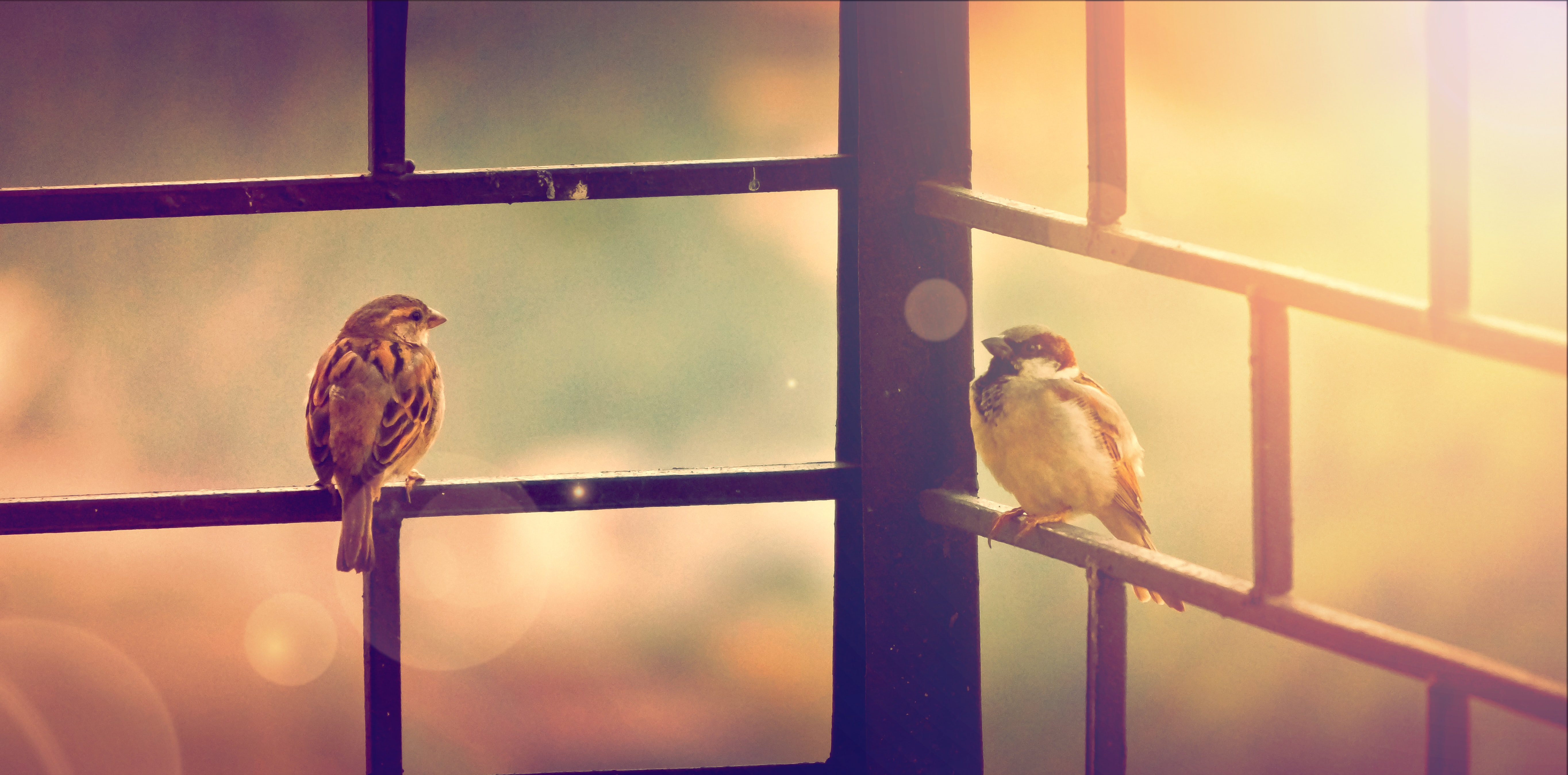 Two sparrows sitting on a black fence railing against a blurry green and orange background
