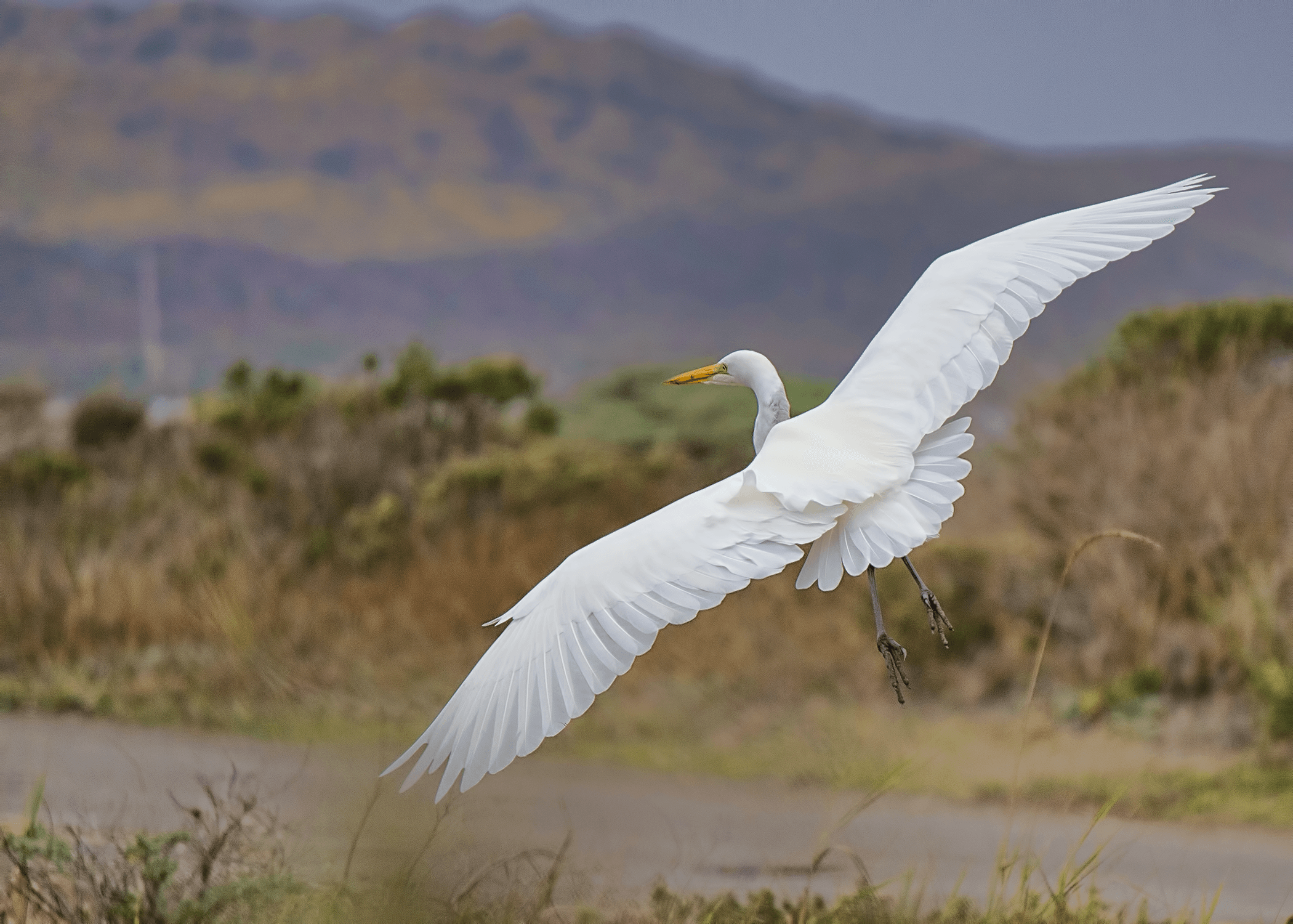 white bird over green grass