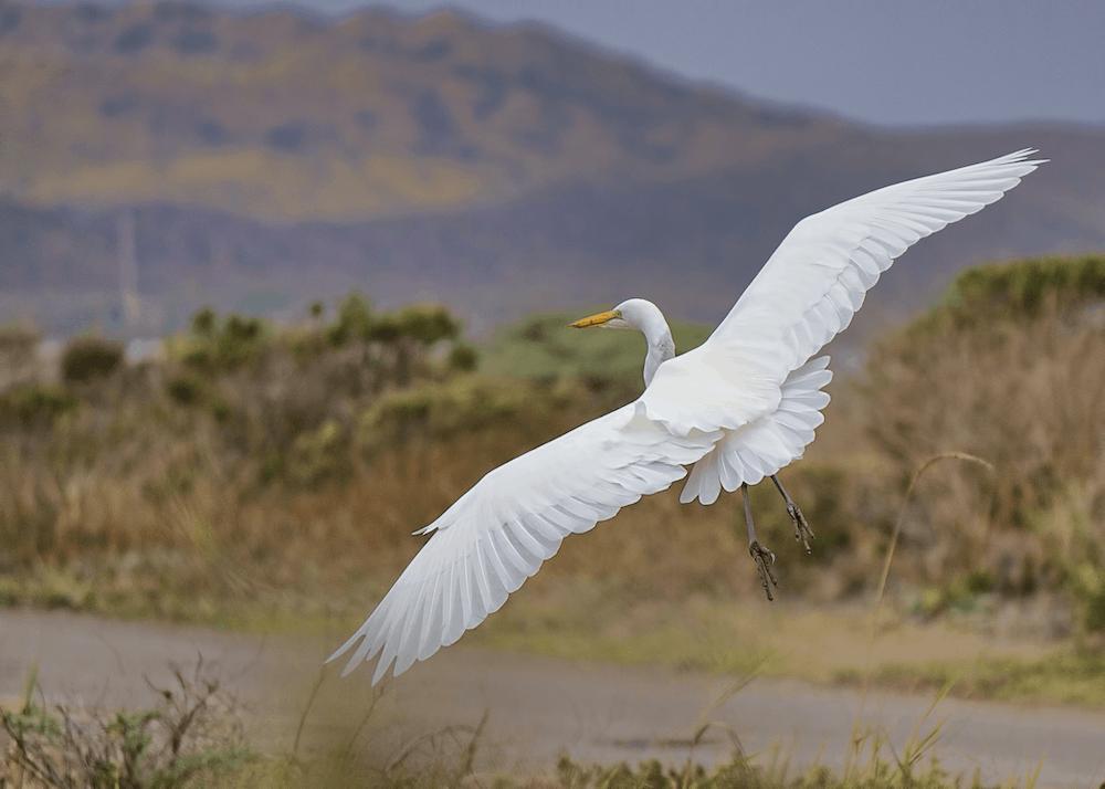 white bird over green grass