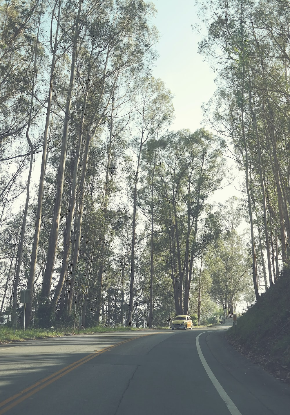 yellow car surrounded by trees during daytime