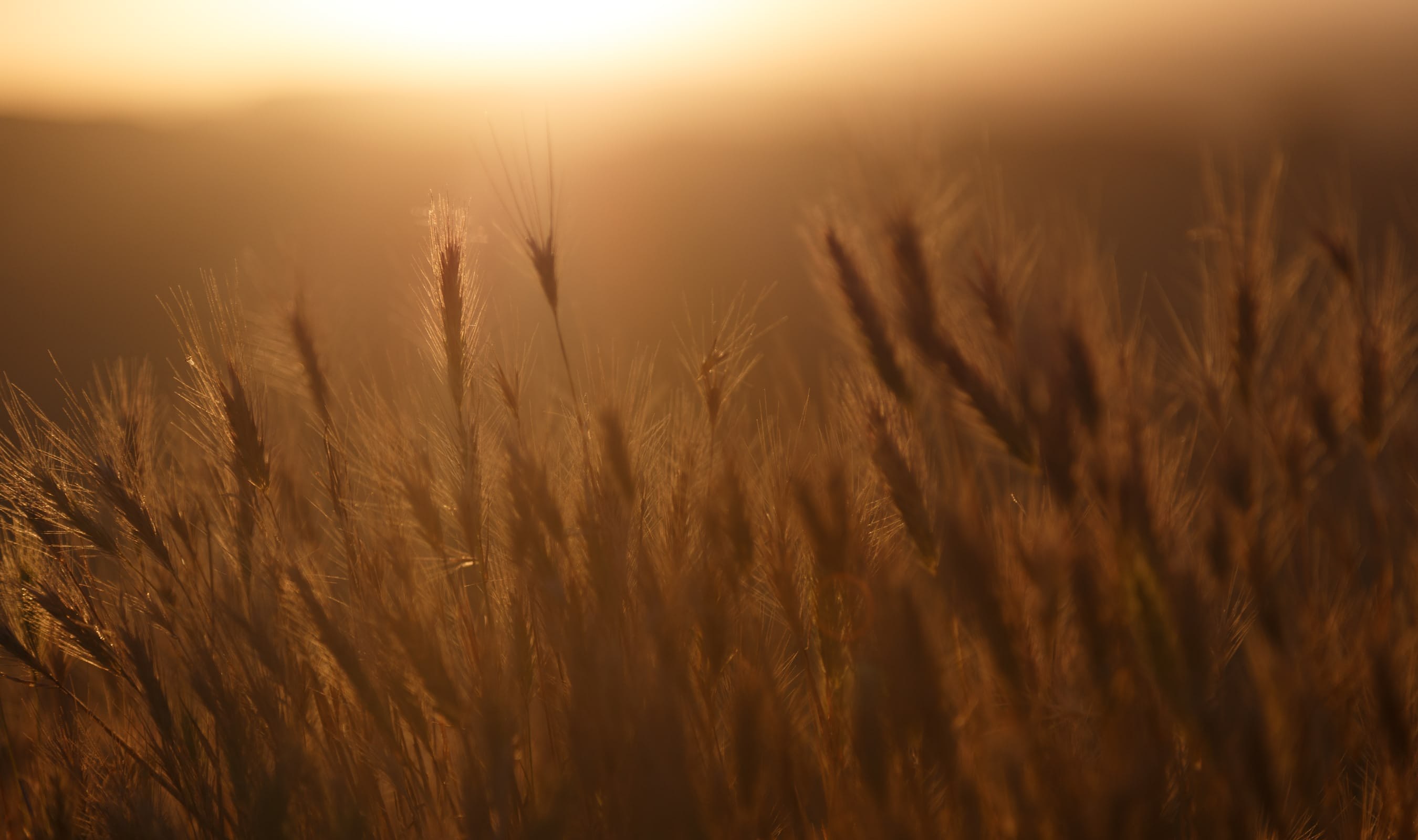 landscape photo tip for beginners for getting good lighting