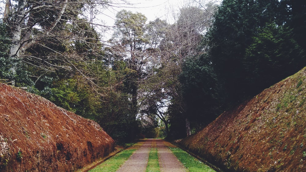 photo of empty pathway surrounded by trees