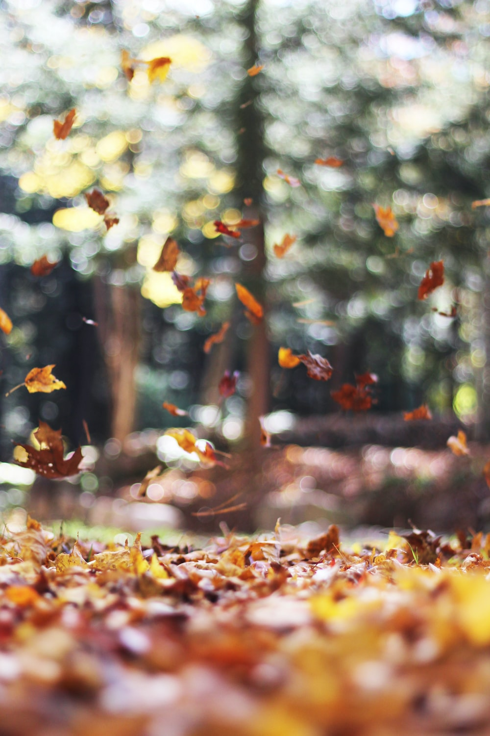 selective focus photography of orange and brown falling maple leaves
