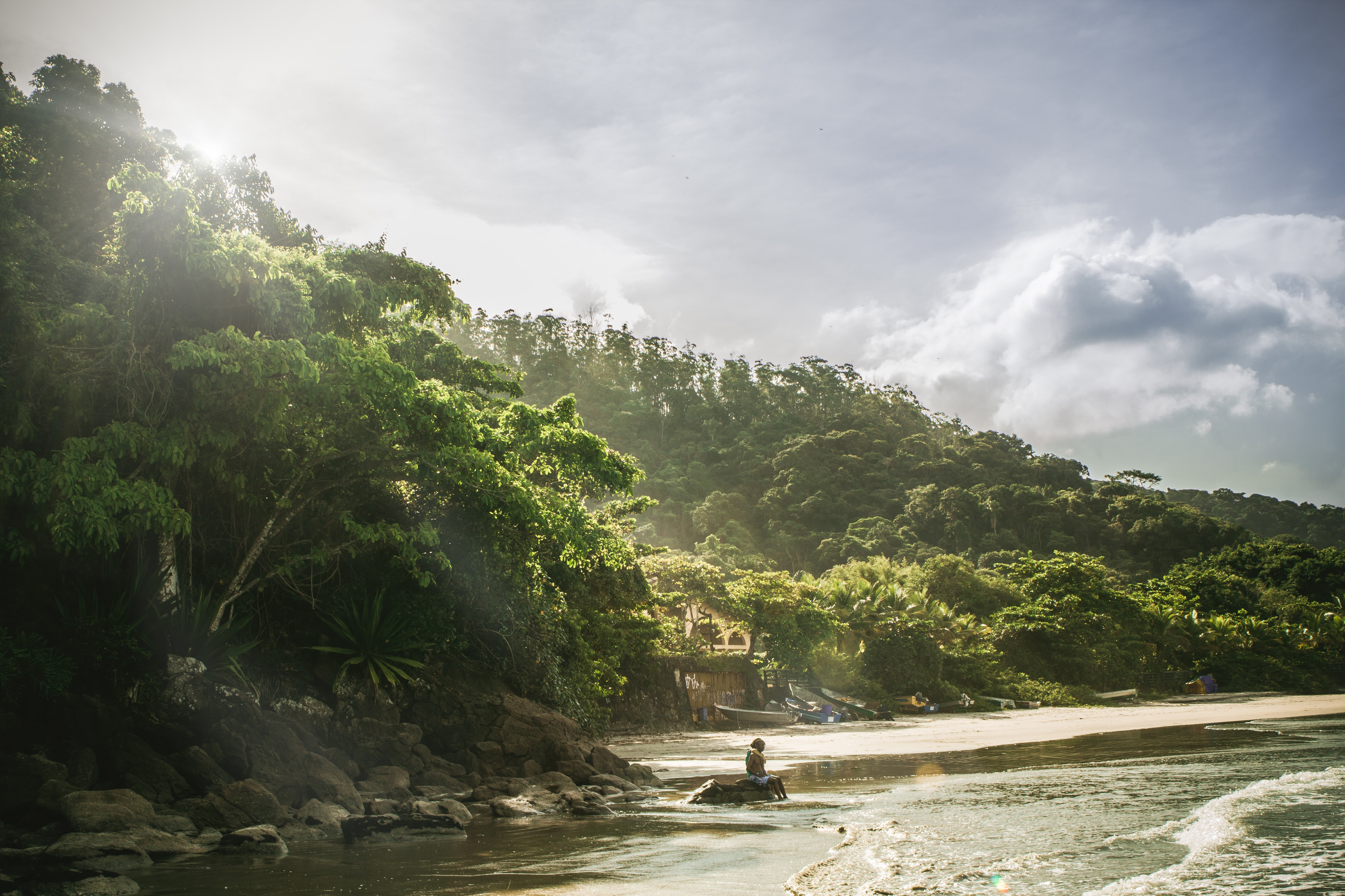 View of heavily dense forest island near beach