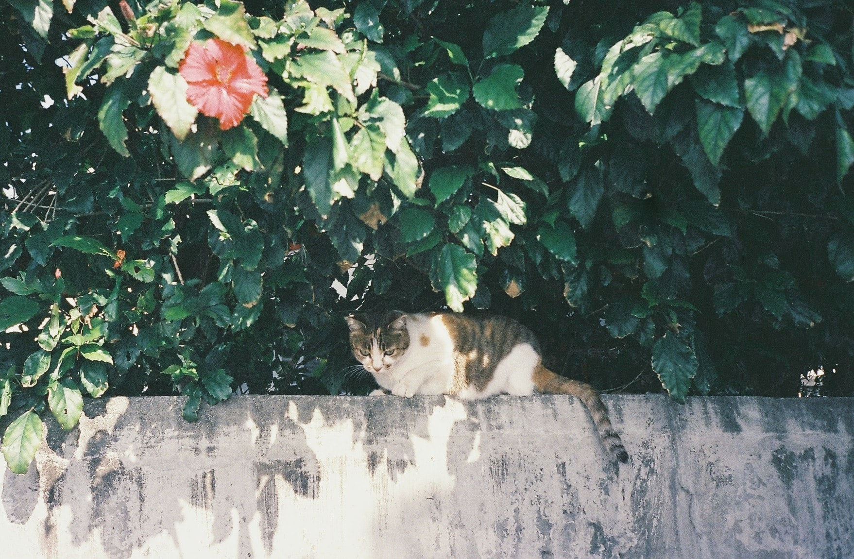 A cat sitting on a concrete wall under a flowering tree