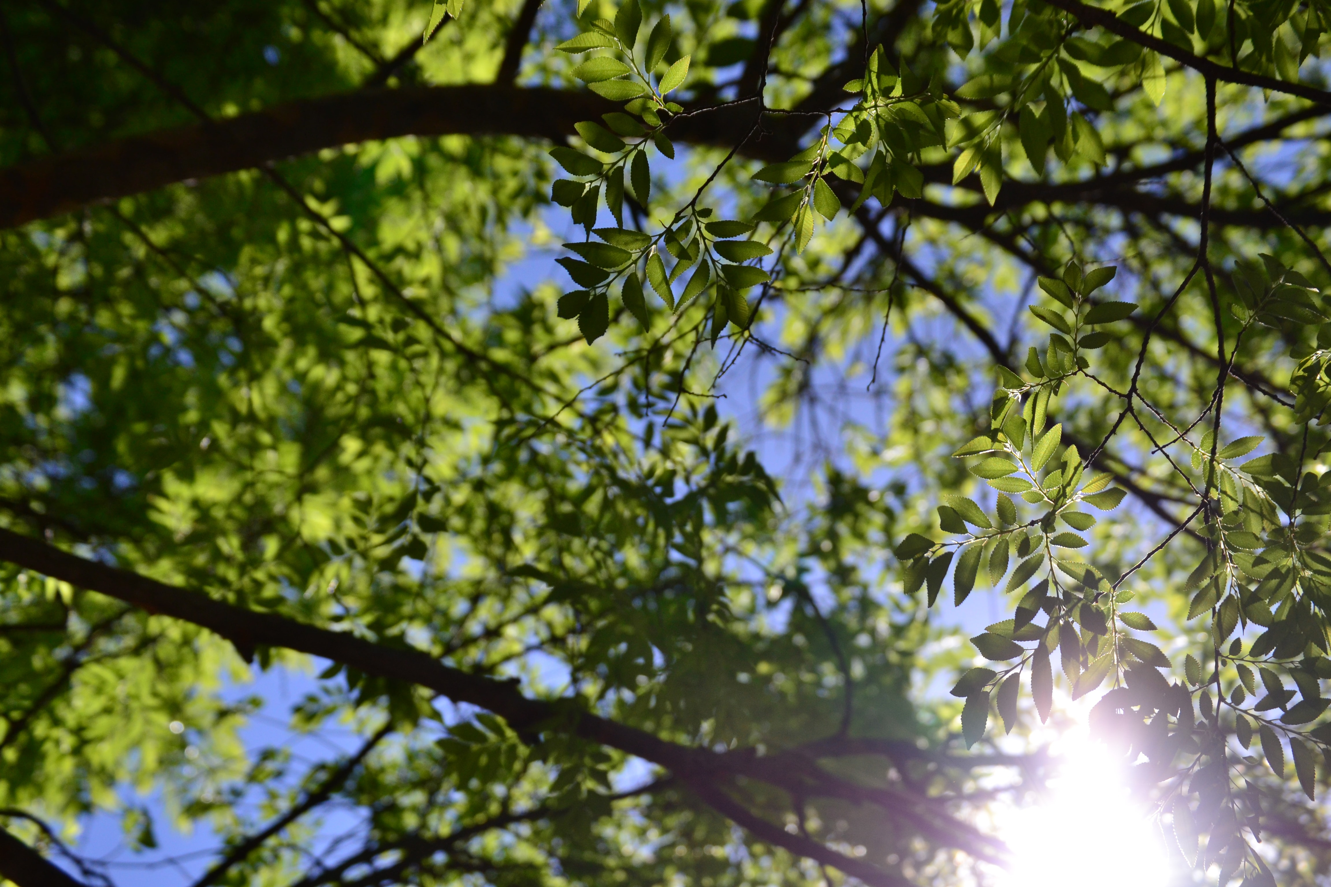 low-angle photo of green-leafed tree under clear blue sky