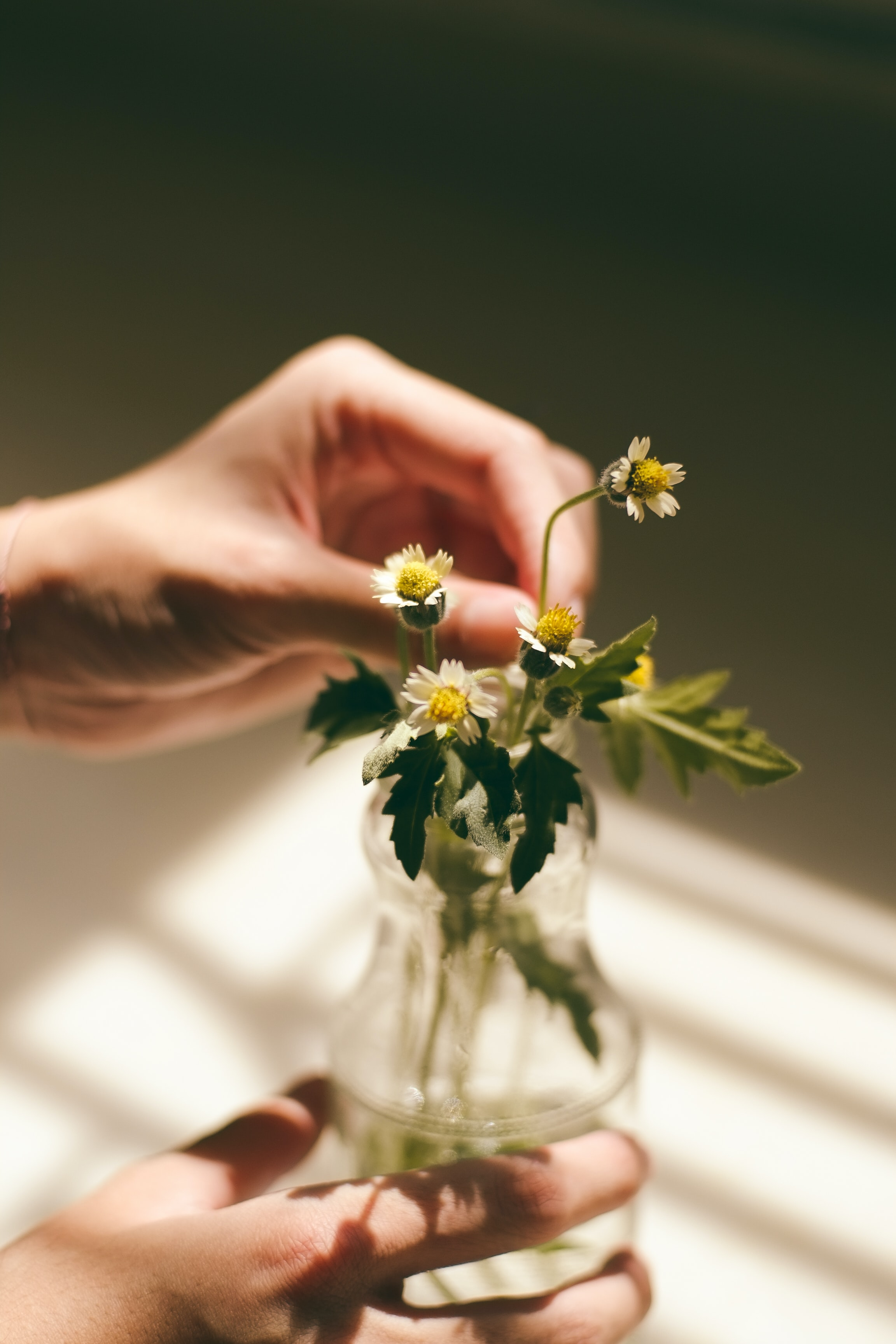 A person's hands touching small white flowers in a glass bottle