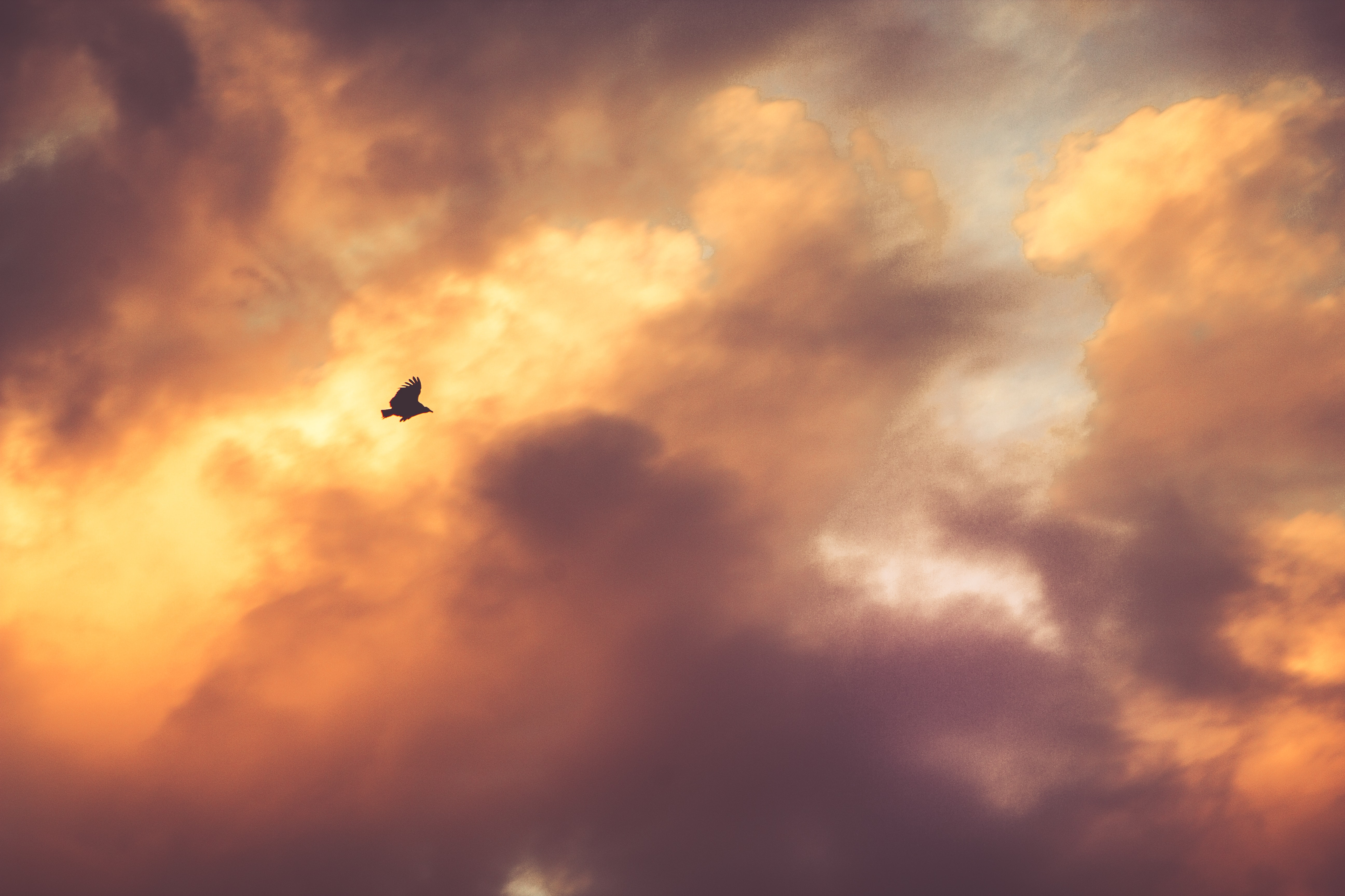 A dark silhouette of a bird against a fiery sky during sunset