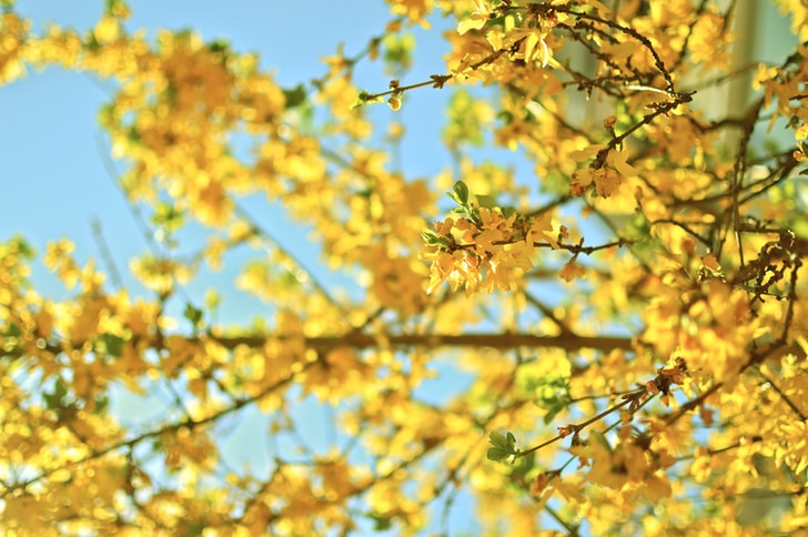 L'Earth Day è da anni un'occasione d'oro, spesso sprecata, per discutere e riflettere sulle condizioni del pianeta, sempre più caldo, sempre più desertico, sempre più povero di biodiversità, sempre più avvelenato.<br />In genere le politiche ambientaliste, come molti altri temi del nostro vivere quotidiano, vengono interamente demandati alla classe politica come se fosse un pianeta esclusivamente loro, è certamente vero che le politiche per la