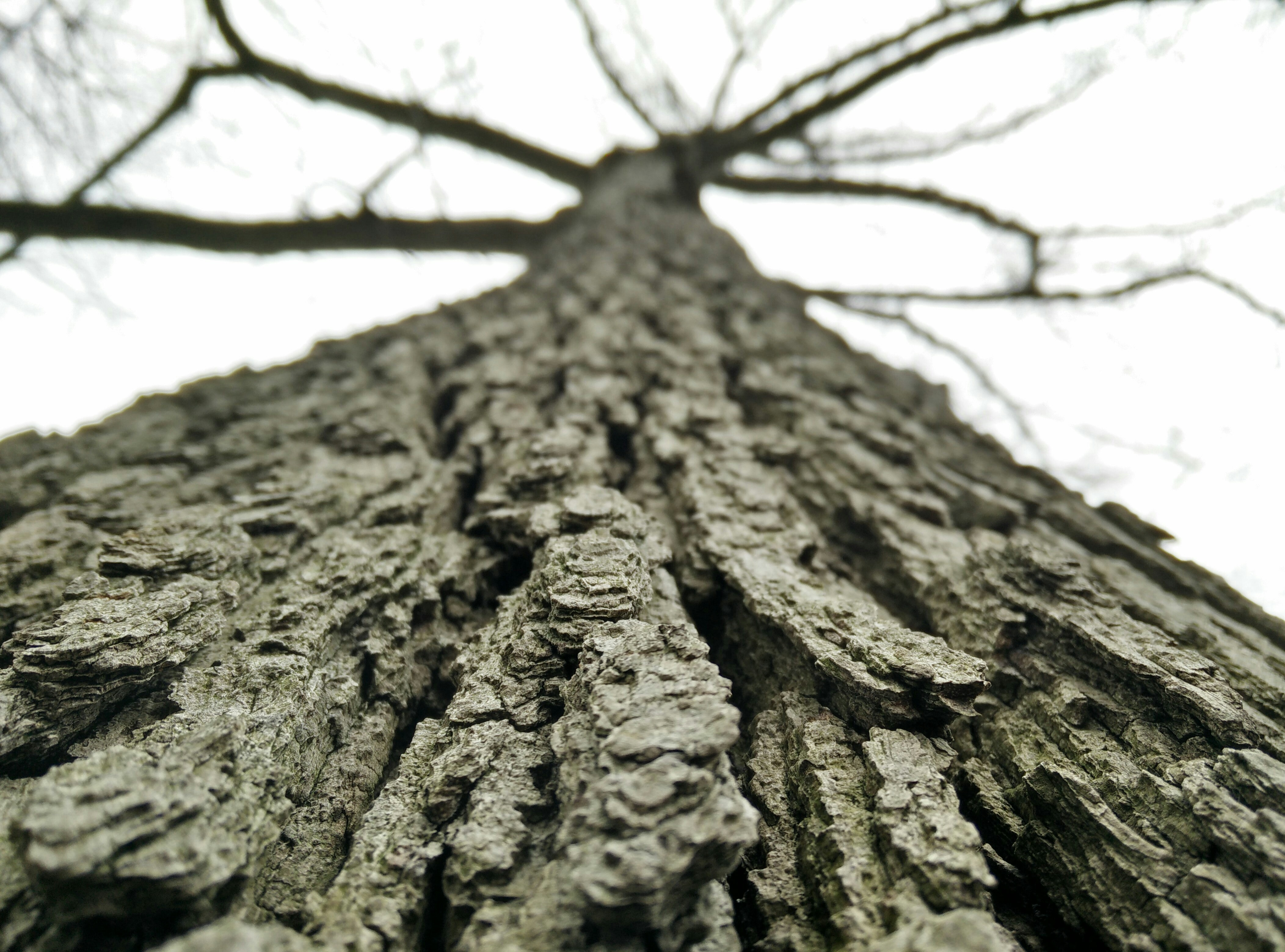 A low-angle macro shot of the bark of a tall tree