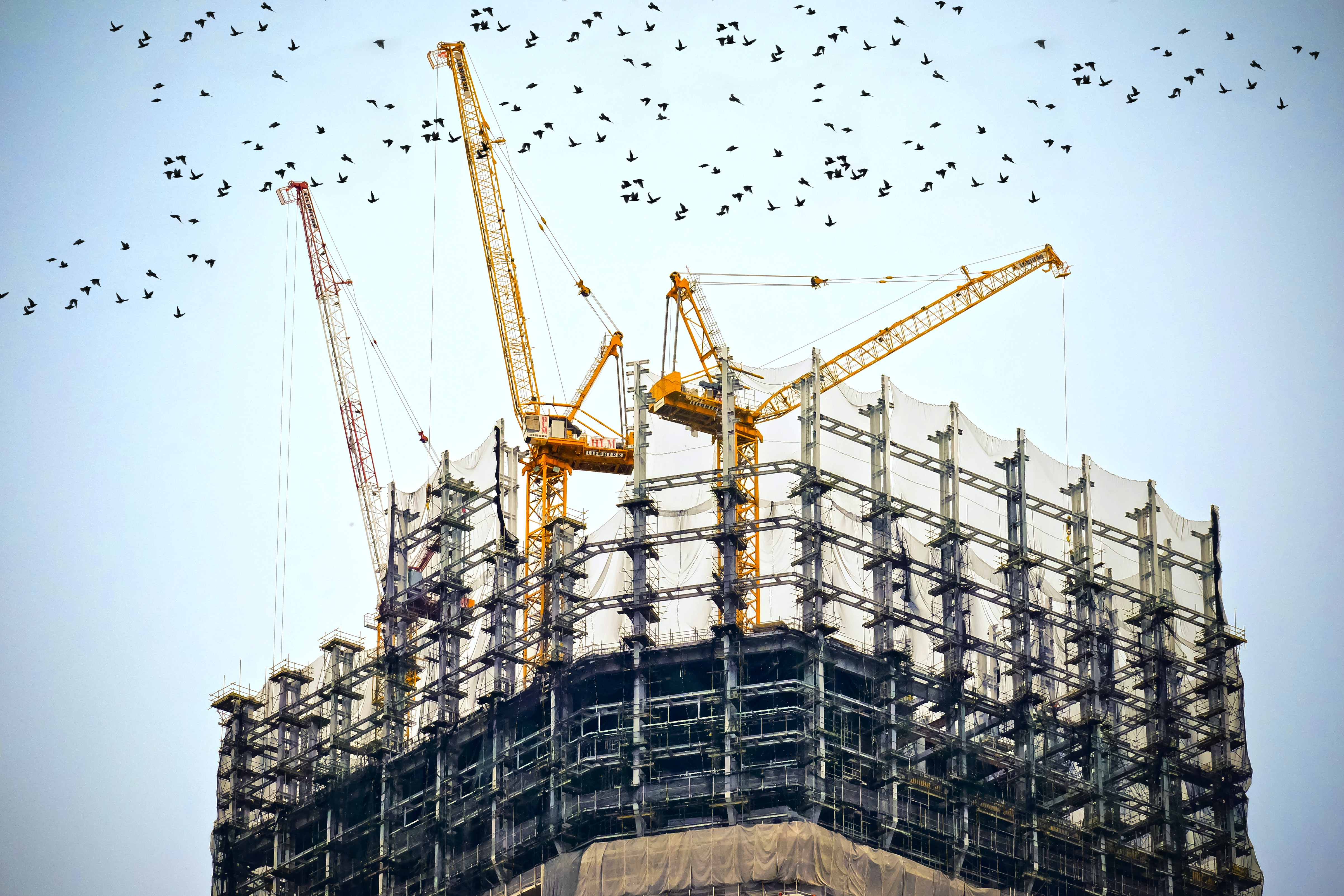 Birds flying around a half-built building and construction site