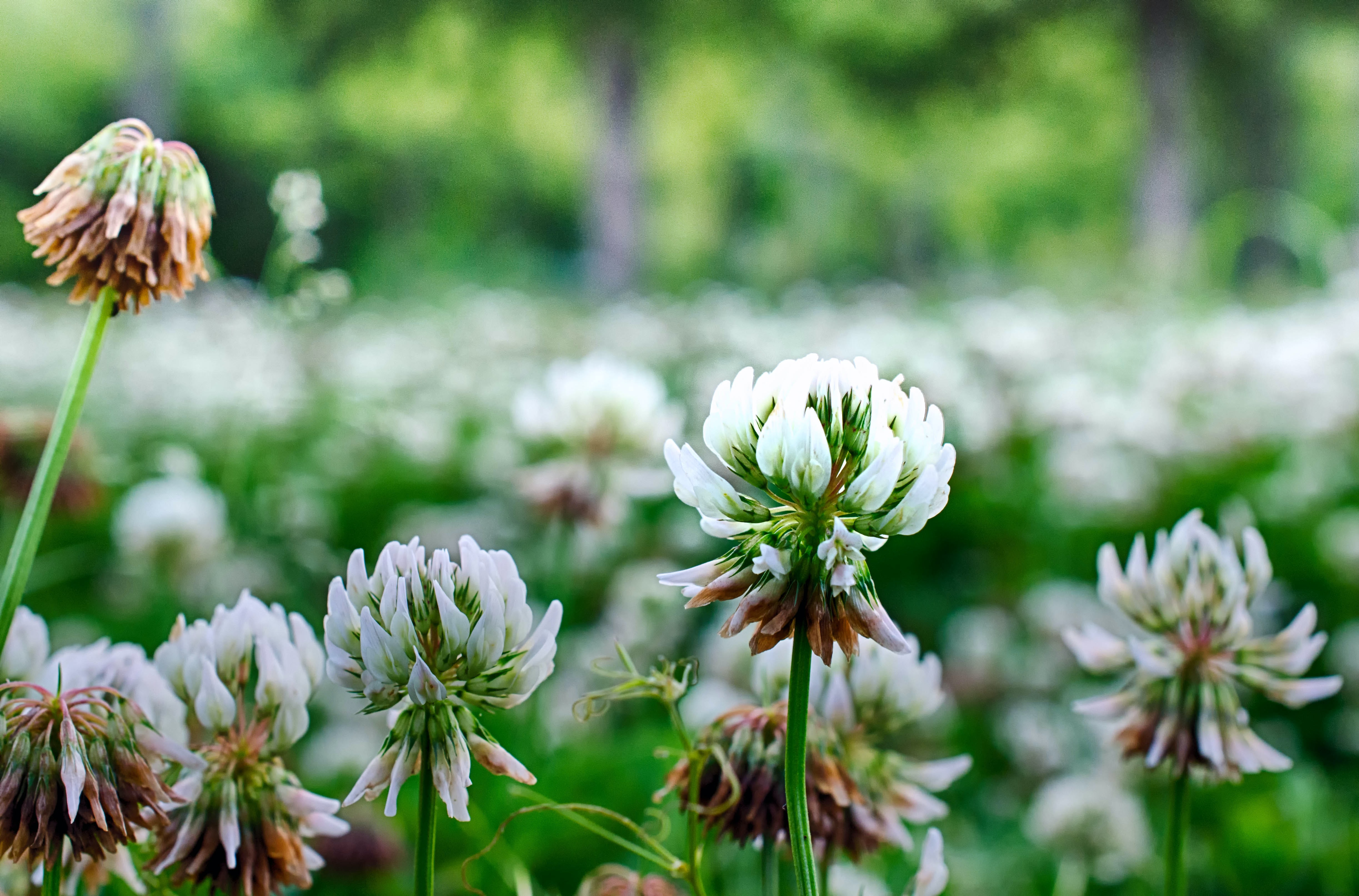 shallow focus of white flowers