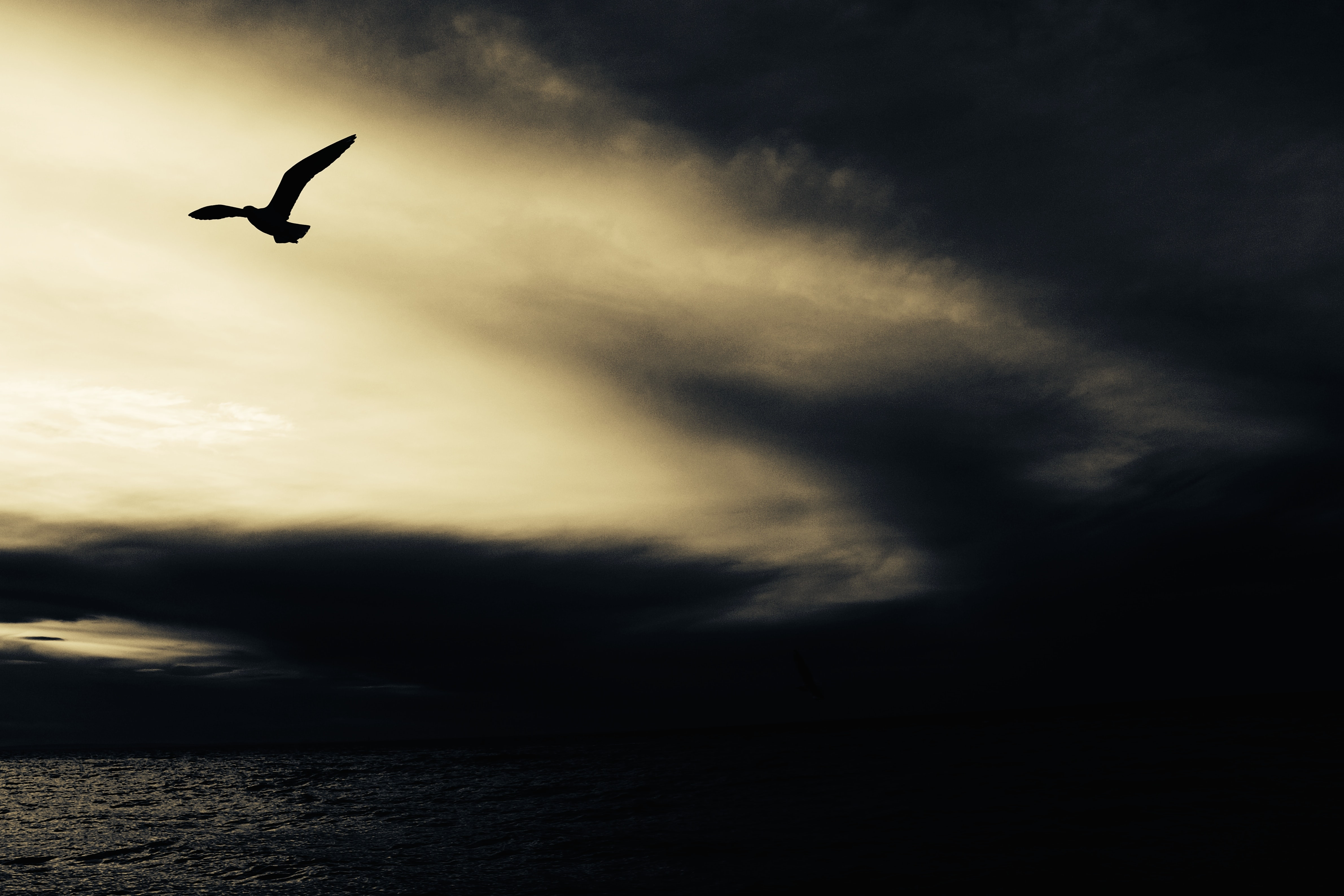 A silhouette of a bird in flight against a patch of light in the evening sky