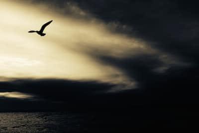 Wataridori: Migratory Birds forever stories