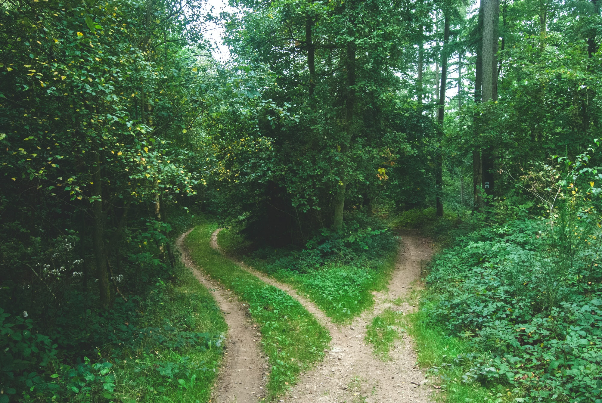 Forking forest path