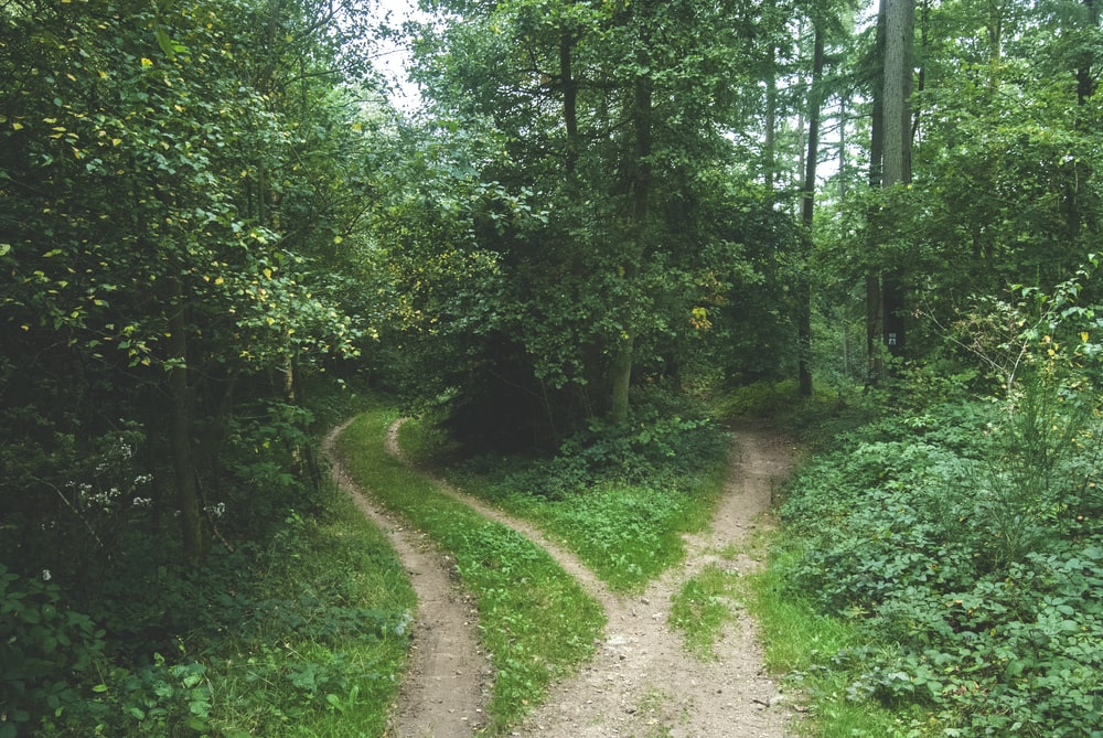 two roads between trees