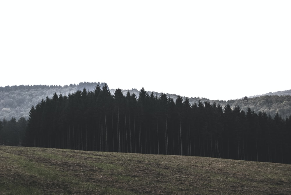 landscape photography of pine trees at mountain