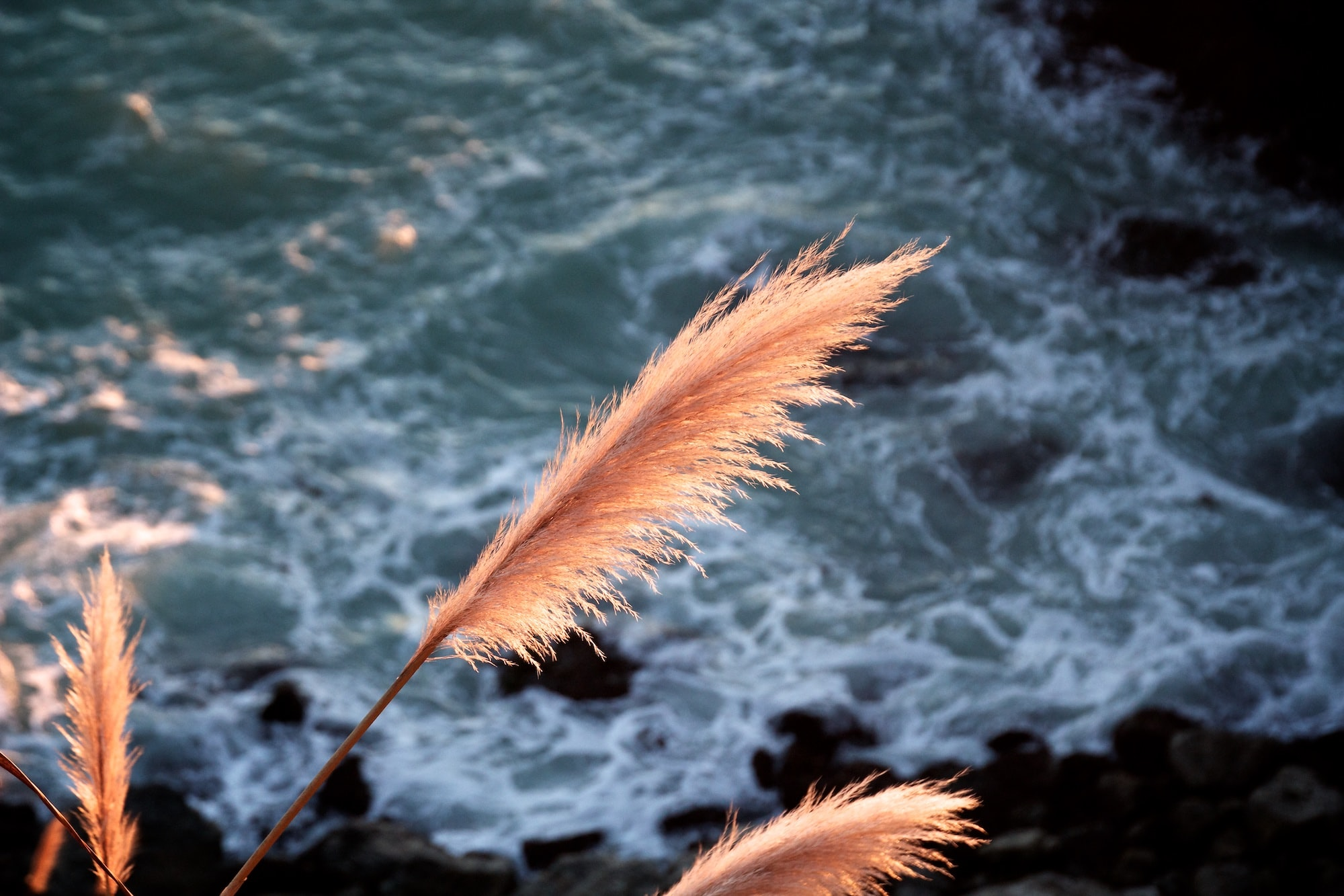 A close-up of several orange feathers above sea waves crashing against the sun