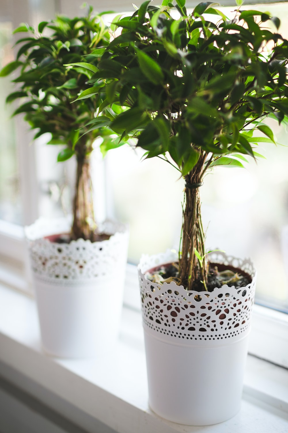 potted green plant near window
