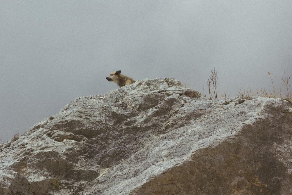 brown dog on gray rock at daytime