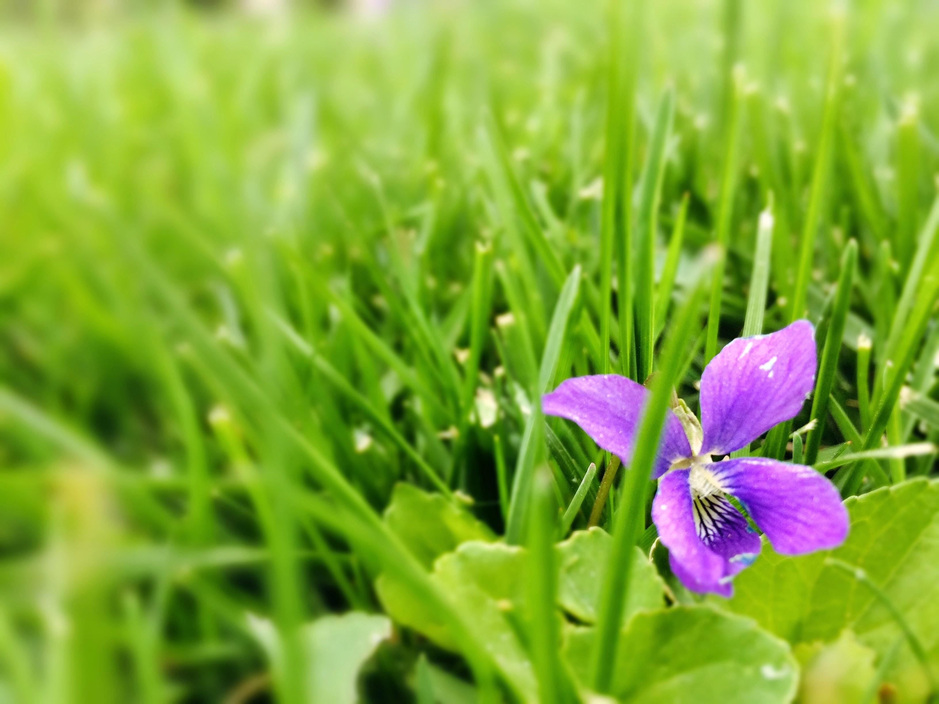 A single purple flower in a field.