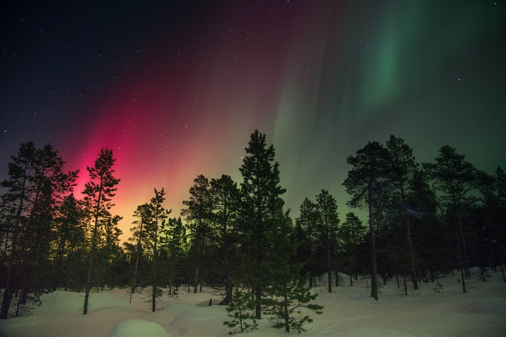 trees and aurora rays
