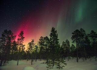 trees and aurora rays