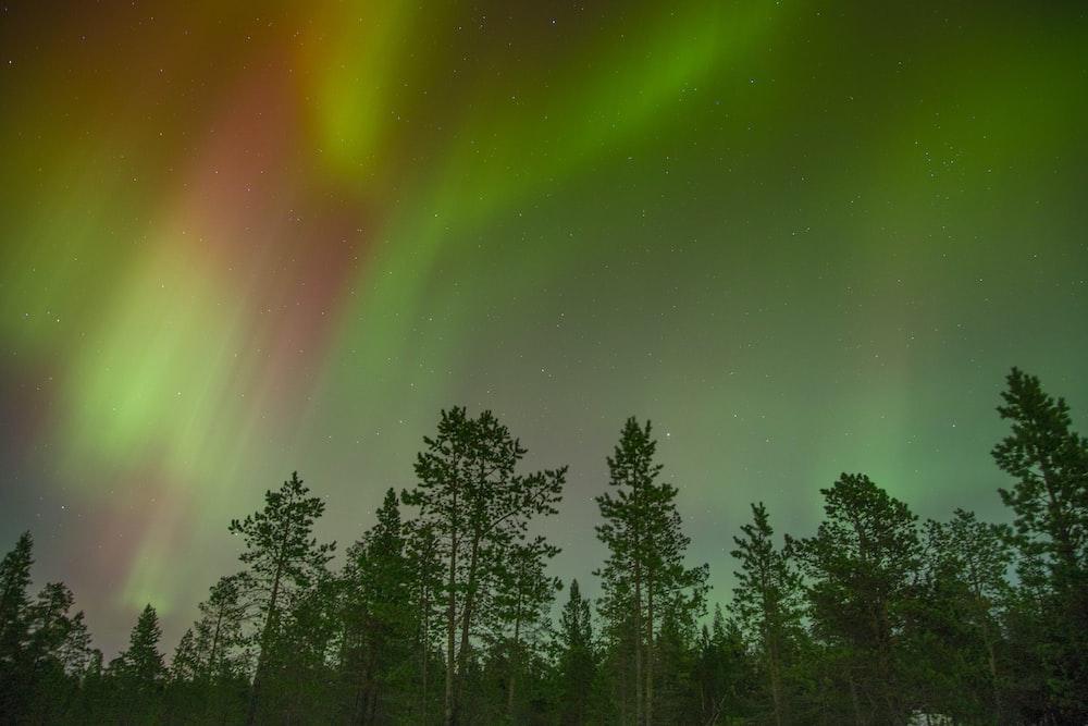 aurora view during night time