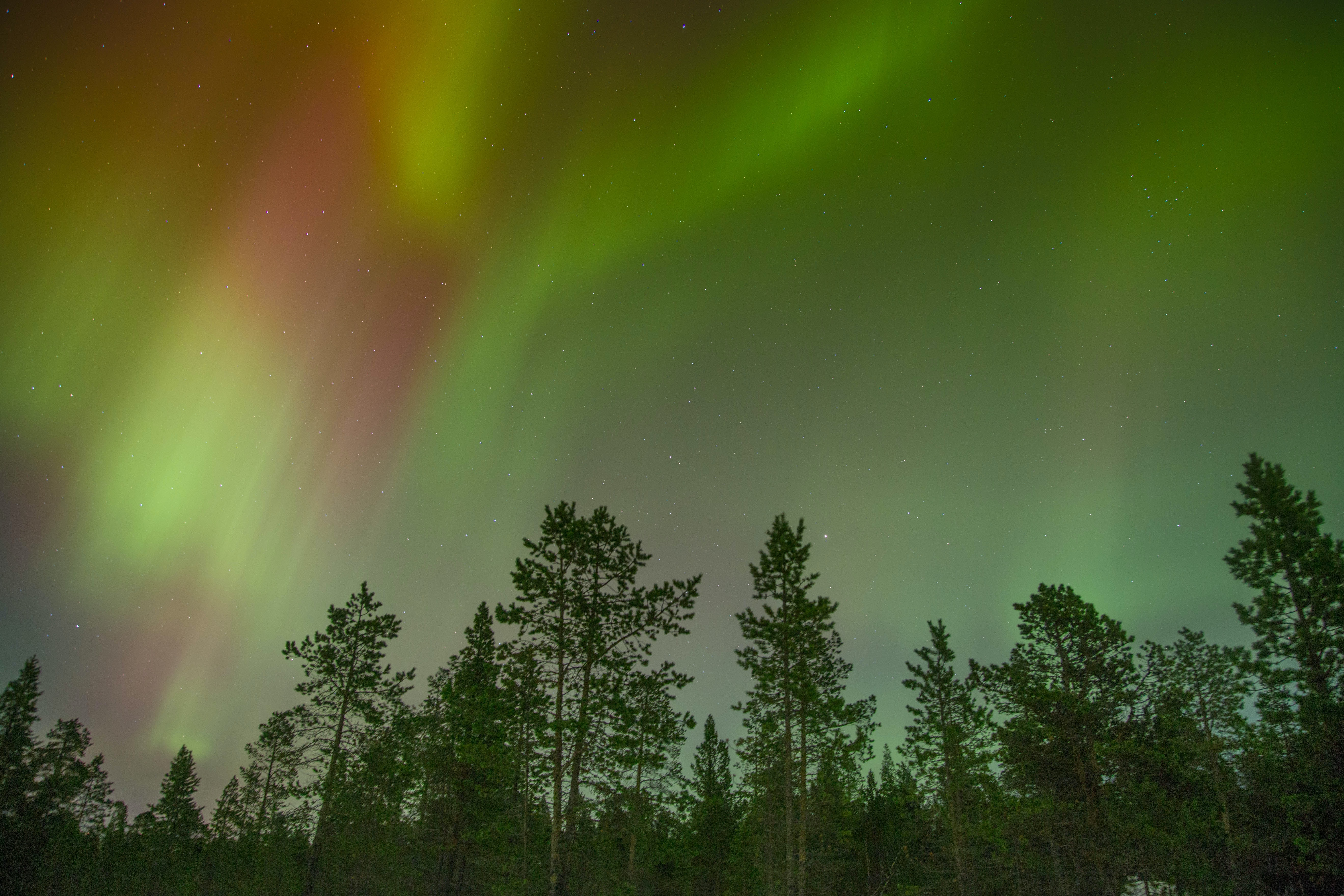 Green and red aurora borealis on a starry sky over a forest