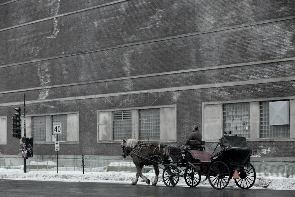 man riding carriage with horse near building