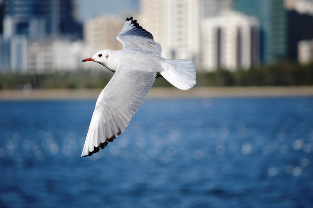 shallow focus photography of seagull flying above water