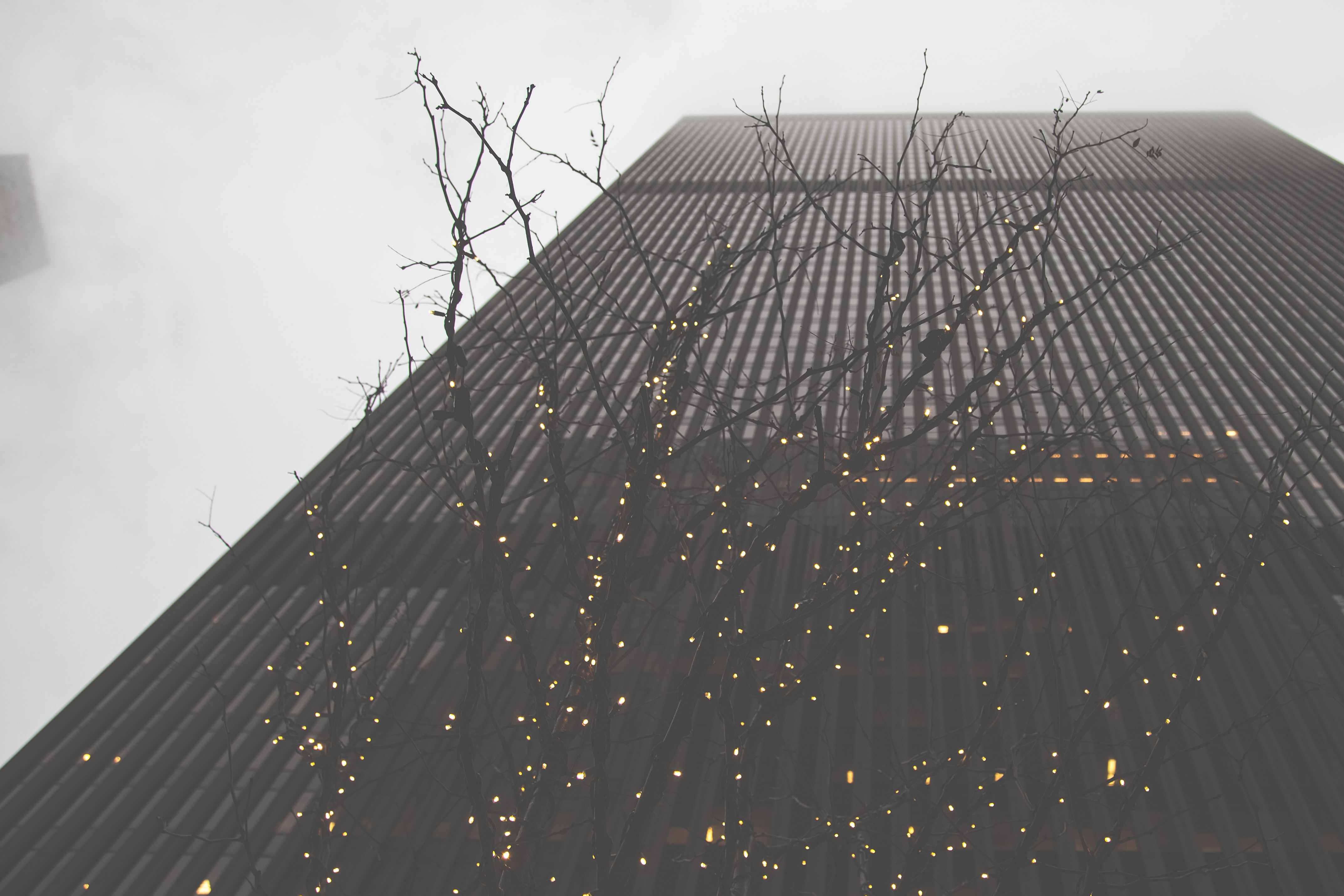 low angle photography of bare tree and building