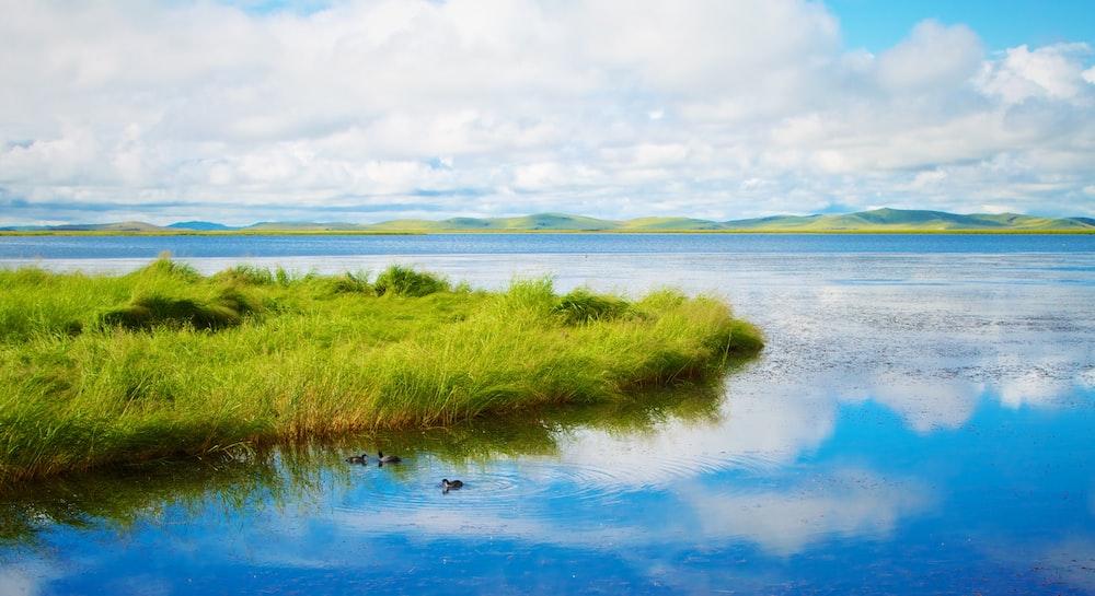 green grass near calm body of water
