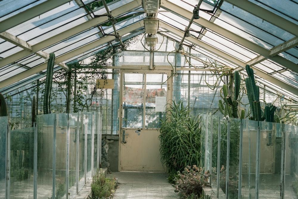 green plants on white wooden frame